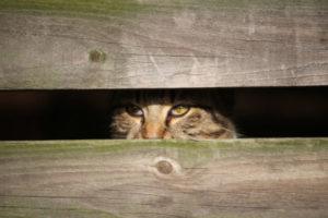 Why does my cat ambush me?