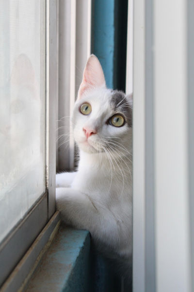 Why does my cat meow when I'm gone?