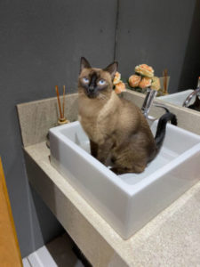 Why does my cat dig in the sink?