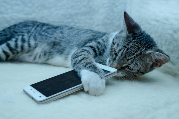 Why does my cat headbutt my phone?