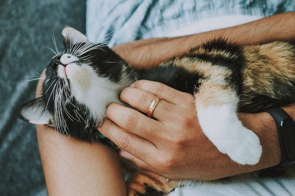 Why does my cat hug my arm?