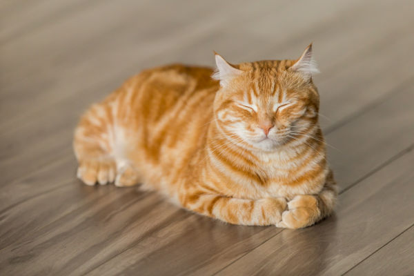 Why does my cat prefer to sleep on the floor?