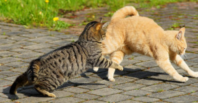 A striped cat play fighting with a ginger cat.
