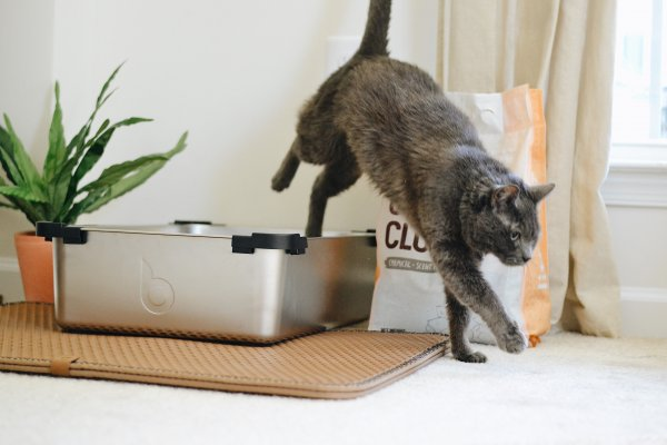 A cat jumping out of a litter box.