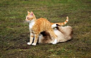 Cats playing.