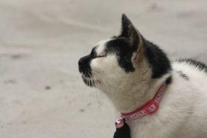 Cat wearing a collar.