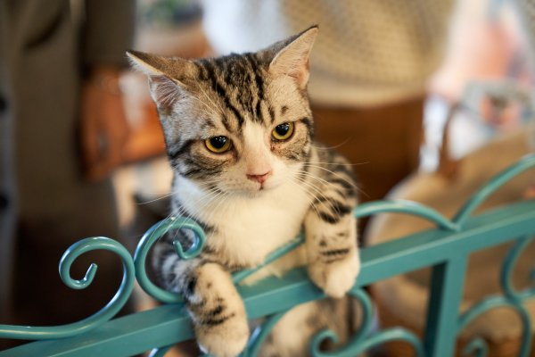 Cat standing on a metal gate.