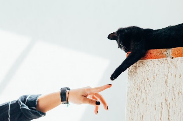 A black cat.