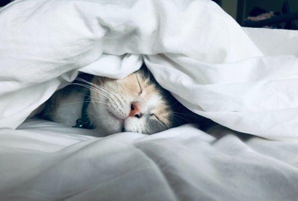 Cat under a blanket.