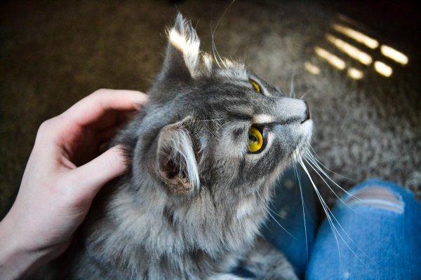 Cat sitting on lap.