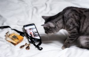 Cat staring at smartphone screen.