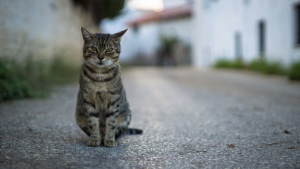A cat staring.