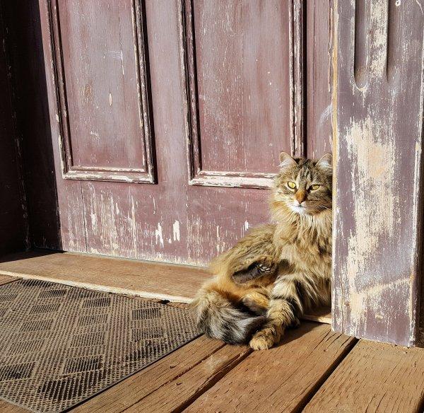 a cat sitting by door.