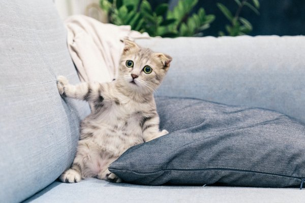 Kitten sitting on sofa.