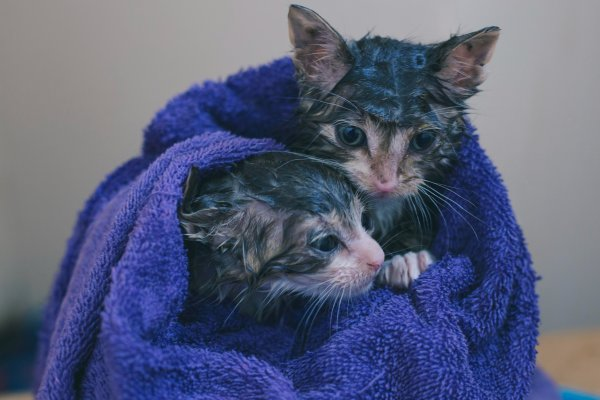 Two washed kittens.