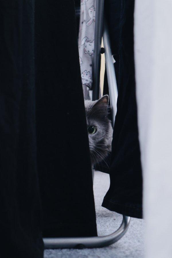 A cat peeping.