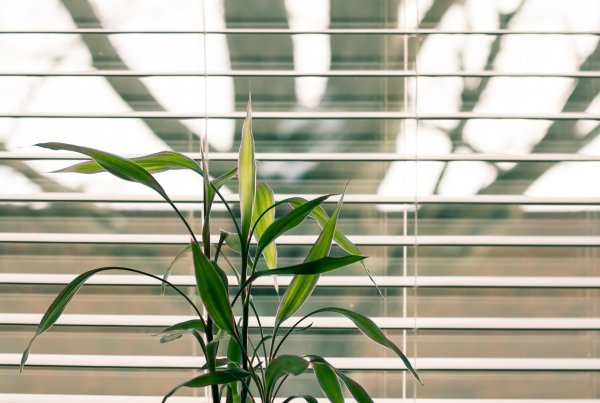 Green leafed plant beside window blinds.