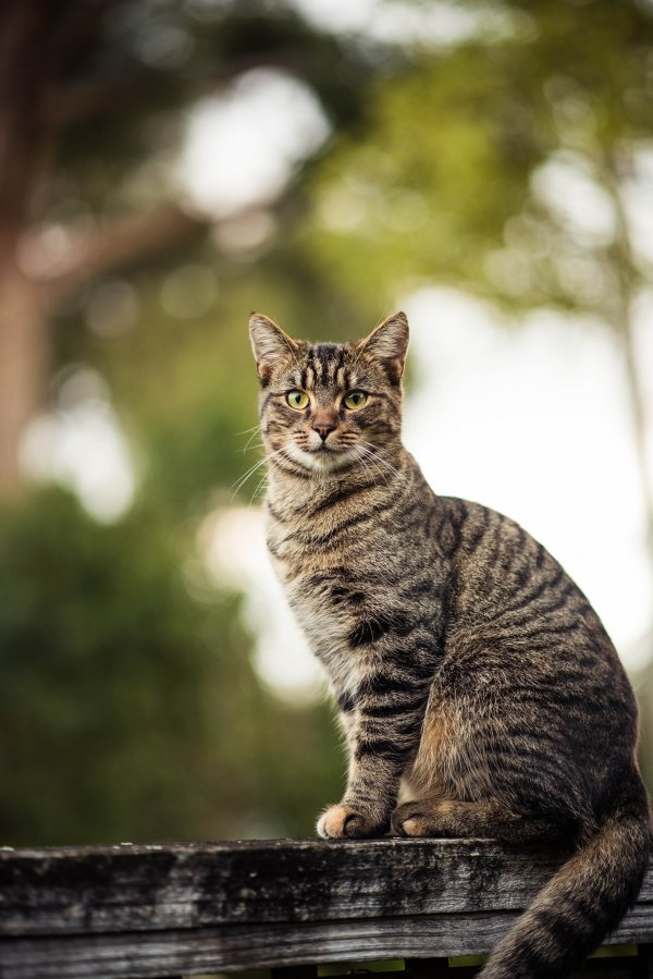 Uncollared cat standing outdoors.