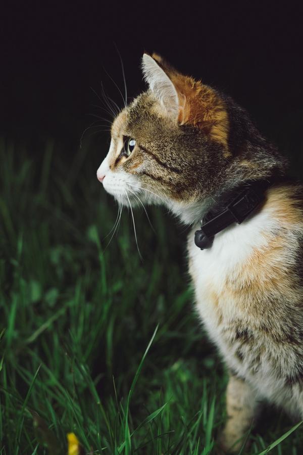 Cat focusing on a prey.