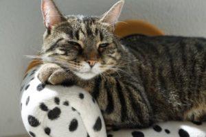 A cat resting.