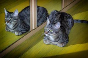 Cat standing beside a mirror.
