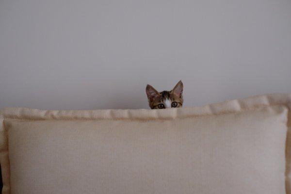 A cat hiding.