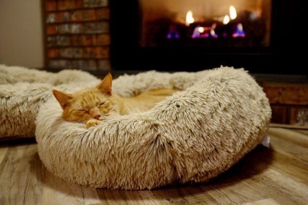 Orange cat sleeping.