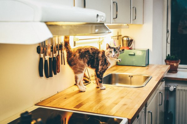 Cat on top of a sink.