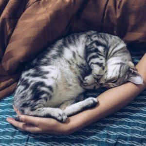 A cat sleeping.